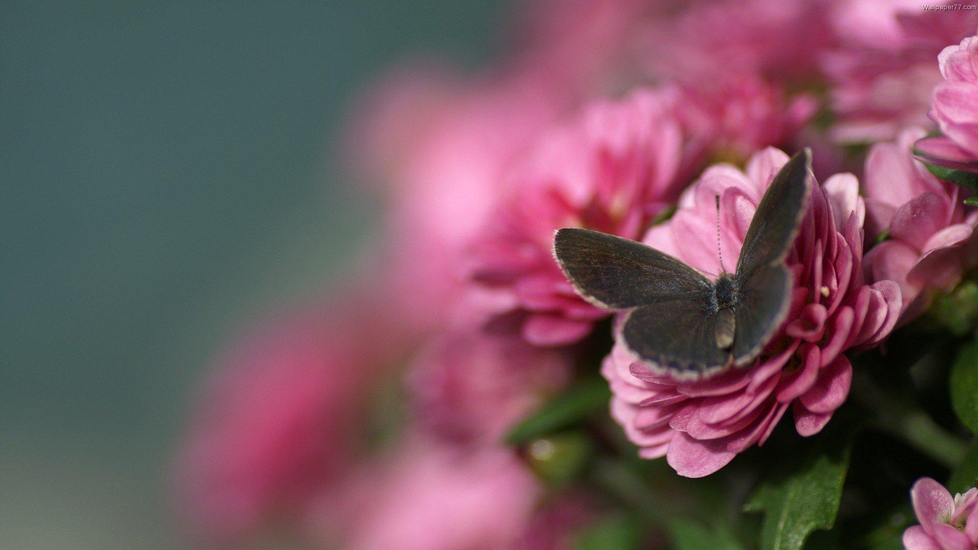 Фото цветы высокое качество